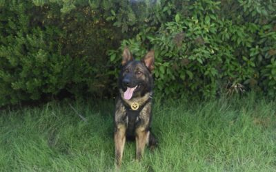 Sheriff's K-9 Stabbed by Suspect, Expected to Survive